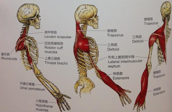 arm-line1