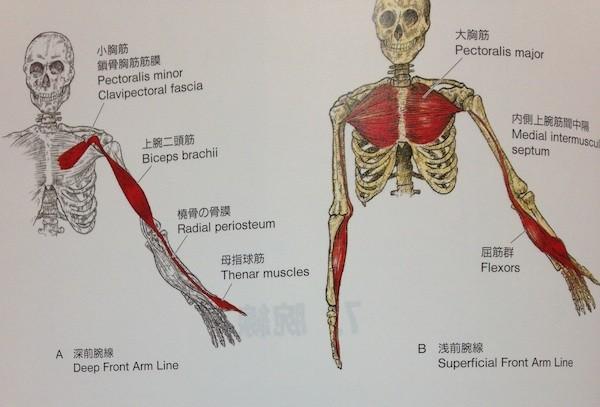 arm-line2