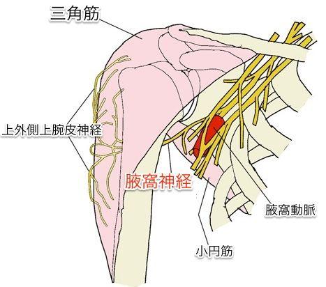 axillary-nerve