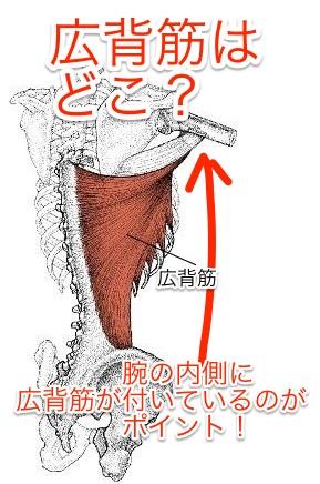 latissimus-dorsi-make-warp-waist