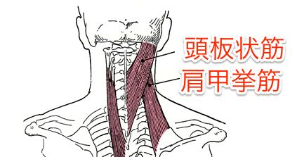 neck-behind-lump-cause-muscle