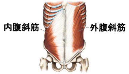 oblique-muscle