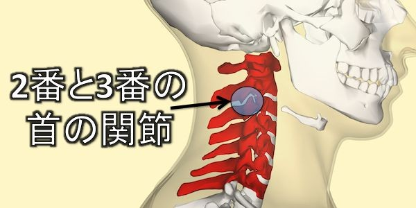 Cervical facet joints