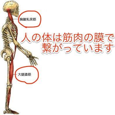 胸鎖乳突筋の筋膜の繋がり