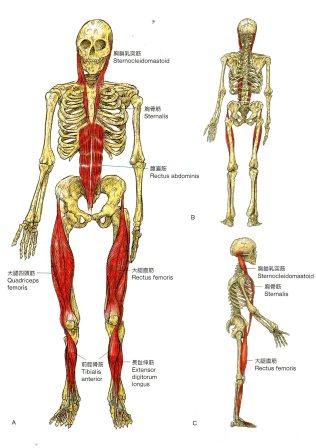 http://www.anatomytrains.jp/