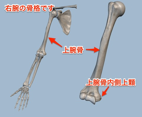 humeral-medial-epicondyle