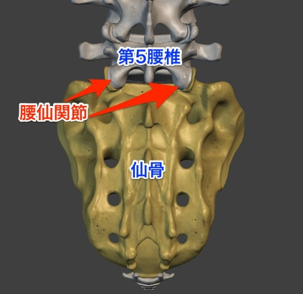 lumbosacral-joint