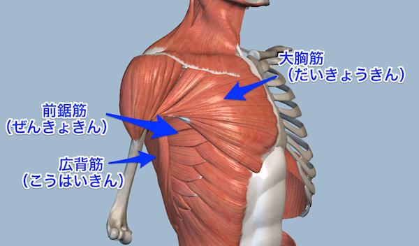 肩を前に動かく筋肉